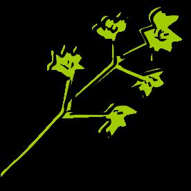 REPeat explore an ingredient parsley